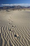Foot Prints in Sand – Death Valley - Vertical. Foot prints in the sand of the dunes of Death Valley. Foot prints lead into the distance. Room for text or stock image