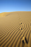 Foot prints in the sand dunes. Stock Photos
