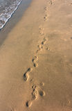 Foot Prints In The Sand Stock Images