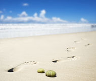 Foot prints on a sandy beach. With the focus on the empty shells of two sea urchins stock photography