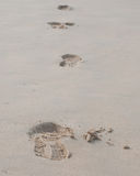 Foot prints on a sandy beach Stock Images