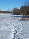 Foot prints in snow Royalty Free Stock Images