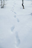 Foot prints in the snow.  royalty free stock photos