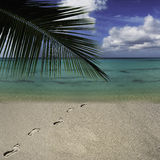 Foot prints in the tropical beach sand. Leading to the turquoise water Stock Photos