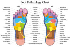 Foot reflexology chart description. Foot reflexology chart with accurate description of the corresponding internal organs and body parts. Vector illustration Stock Photos