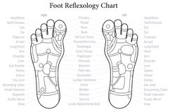 Foot Reflexology Chart Outline. Foot reflexology chart with accurate description of the corresponding internal organs and body parts. Outline vector illustration Royalty Free Stock Photo
