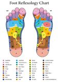 Foot Reflexology Table. Foot reflexology. Alternative acupressure and physiotherapy health treatment. Zone massage chart with colored areas. Numbering and Stock Image