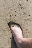 Foot in the sand Stock Images