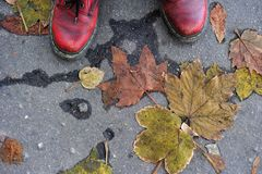 Foot shoes on a background of fallen leaves on the asphalt Royalty Free Stock Photography