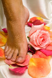 Foot on the silk cloth with rose and rose- royalty free stock images