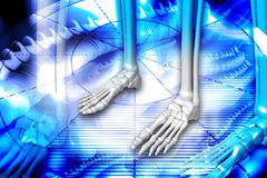Foot skeleton Royalty Free Stock Image