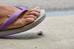 Foot in slipper stepping on gum scrap on ground Stock Photos