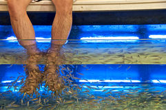 Foot Spa. A very special type of foot spa where tiny Doctor fish will eat away dead skins from your foot Royalty Free Stock Photos