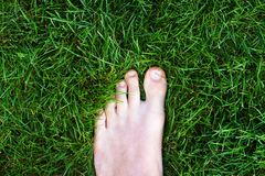 Foot standing in bright green grass. Closeup of a man's left foot standing in the lawn Royalty Free Stock Image