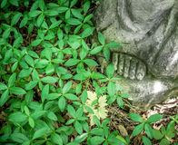 Foot statue in abandoned cemetery in the woods, periwinkle. Forg Royalty Free Stock Photo