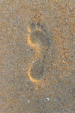 Foot step on  beach sand Royalty Free Stock Photo