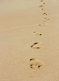 Foot steps Stock Images
