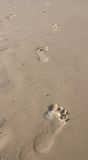 Foot steps. Barefeet marks on wet sand Royalty Free Stock Photography