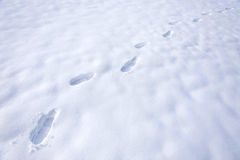 Foot steps. On white snow Stock Image