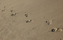 Foot steps. On the beach Royalty Free Stock Image