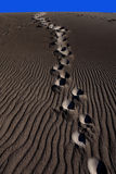 Foot steps in the desert Royalty Free Stock Image