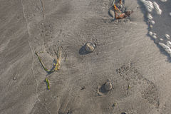Foot steps in the sand. Jellyfish stranded on the sand at low tide with foot prints not yet washed away by the tide.  Taken at Sooes Beach Washington Stock Photography