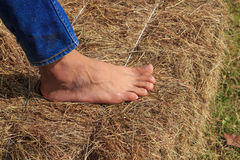Foot is stomping haystack Royalty Free Stock Photography