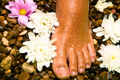 foot on a stone beach with flowers royalty free stock image