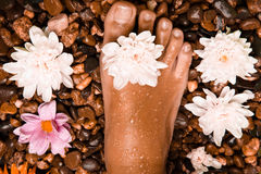 foot on a stone beach with flowers Stock Images