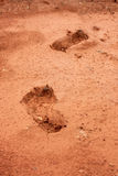 Foot to anyone on the mud Stock Photography