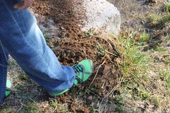 Foot on top of pile of mud and ants. Foot on top of mud and ants at the forest and green grass Stock Photography