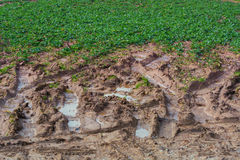 Foot traces and tire marks in the mud Royalty Free Stock Photography