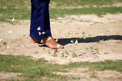 Foot walking through the butterflies. Royalty Free Stock Photography