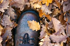 Waterproof leather hiking boot on falled oak leaves stock images