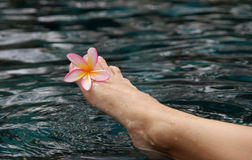 Foot of the young woman with a pink flower in a pool Stock Photos