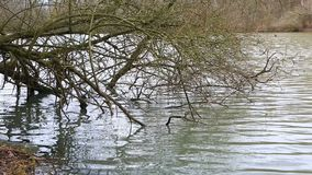 Bare Tree Branches in Water. Footage of bare tree branches in water in a lake in winter stock video