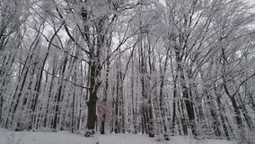 Beautiful Winter Forest. Snow Trees. in mountain. This is footage of Beautiful Winter Forest. Snow Trees. in mountain stock video