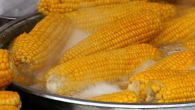 Footage with corn boiled in a large pot stock video