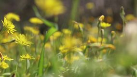 Footage of field with summer flowers moving in the wind. stock video footage