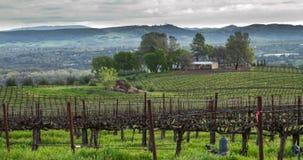 Vineyard Landscape stock video footage