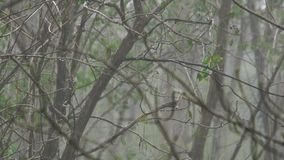 Footage of rain shower in the forest of Thailand stock footage