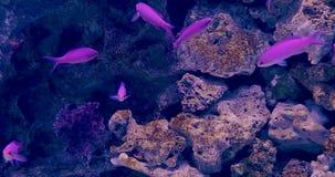 Tropical reef fish, shark and aquatic plants in aquarium. The footage of tropical reef fish, shark and aquatic plants in aquarium stock video
