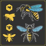 Football, baseball, cricket and hockey logos and labels. Sport club emblems with gorilla. Set of honey emblems and design elements stock illustration