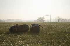 Football boots on a empty football pitch Stock Images