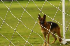 Football dog Stock Images