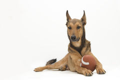 Football Dog. Dog with American Football between his legs royalty free stock photo