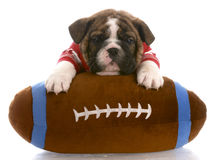 Football fan Stock Images