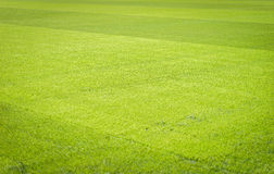 Football field background Stock Photography
