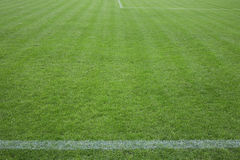 Football field with green grass Stock Photography