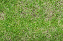 Football field green grass pattern textured background Stock Images